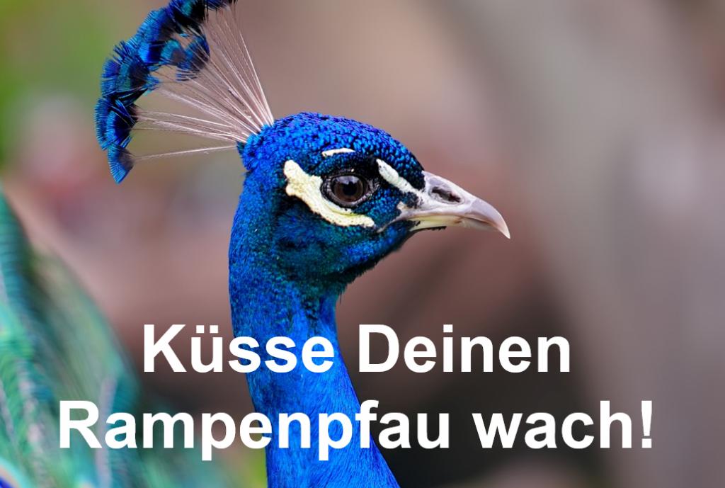 Rampenpfau image